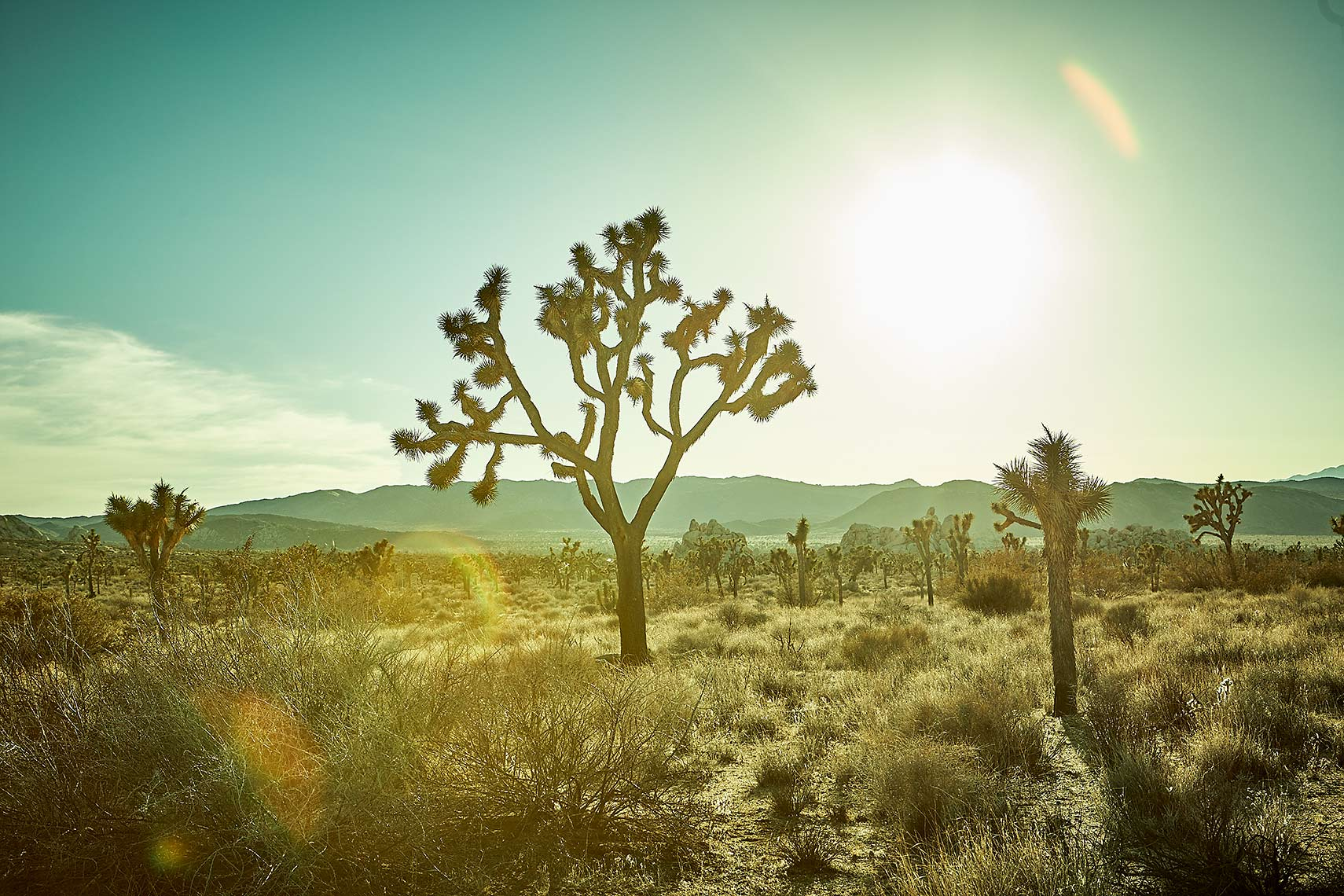 Joshua-Tree_474_RT